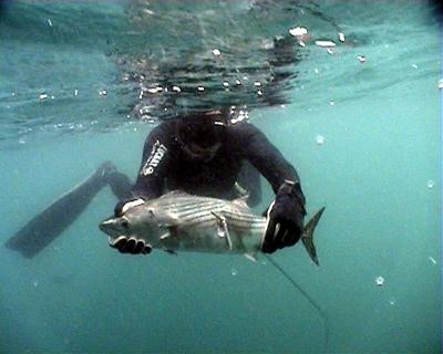 рыба в черном море