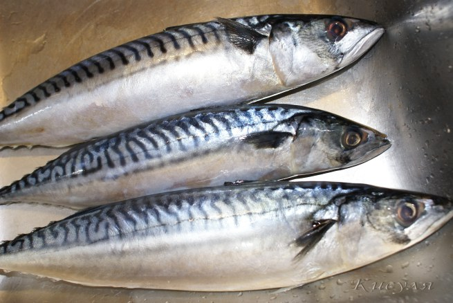 рыбы черного моря- скумбрия