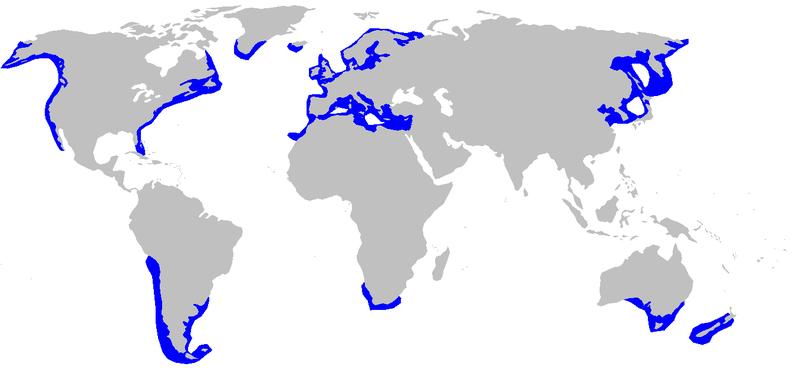 Ареал обитания акулы катран