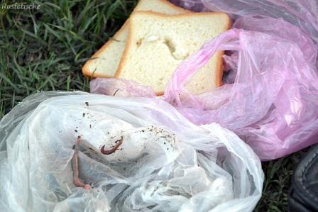 дождевой червь и хлеб
