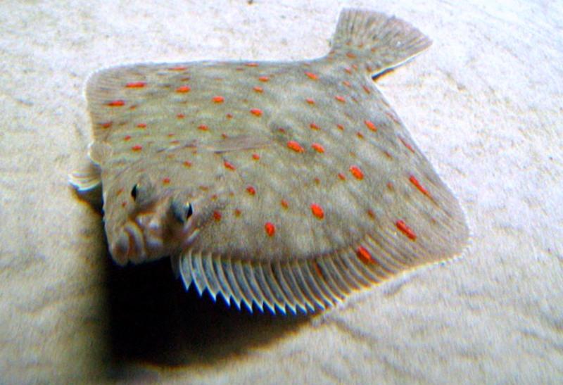 Под водой фото рыбы