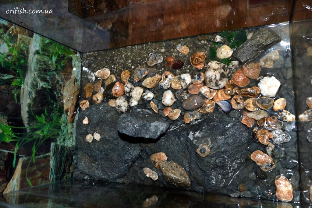 как подготовить камни +для аквариума