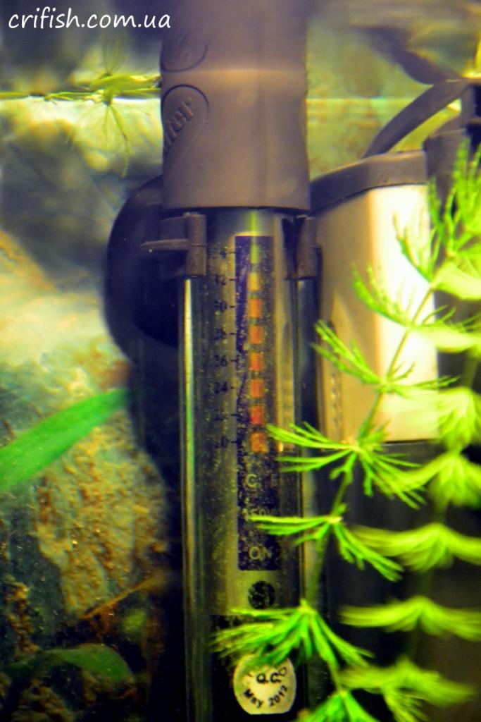 нагреватель в аквариуме фото