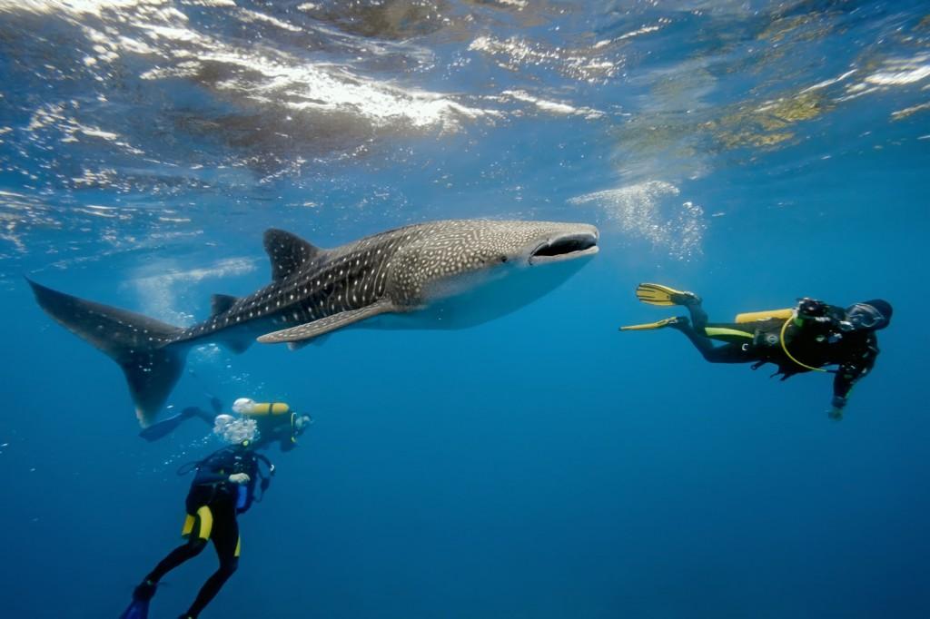 самая большая в мире рыба фото
