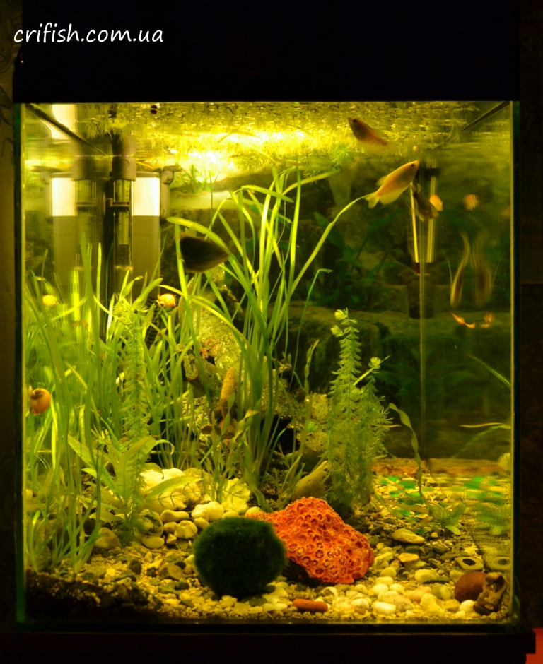 декор аквариума