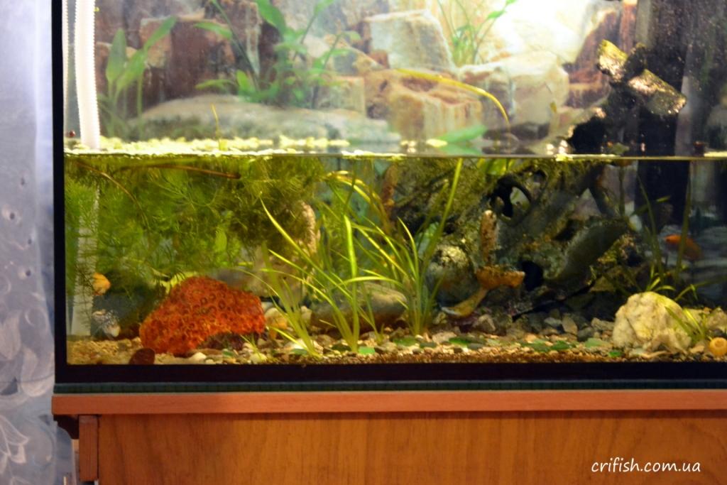 перезапуск аквариума фото
