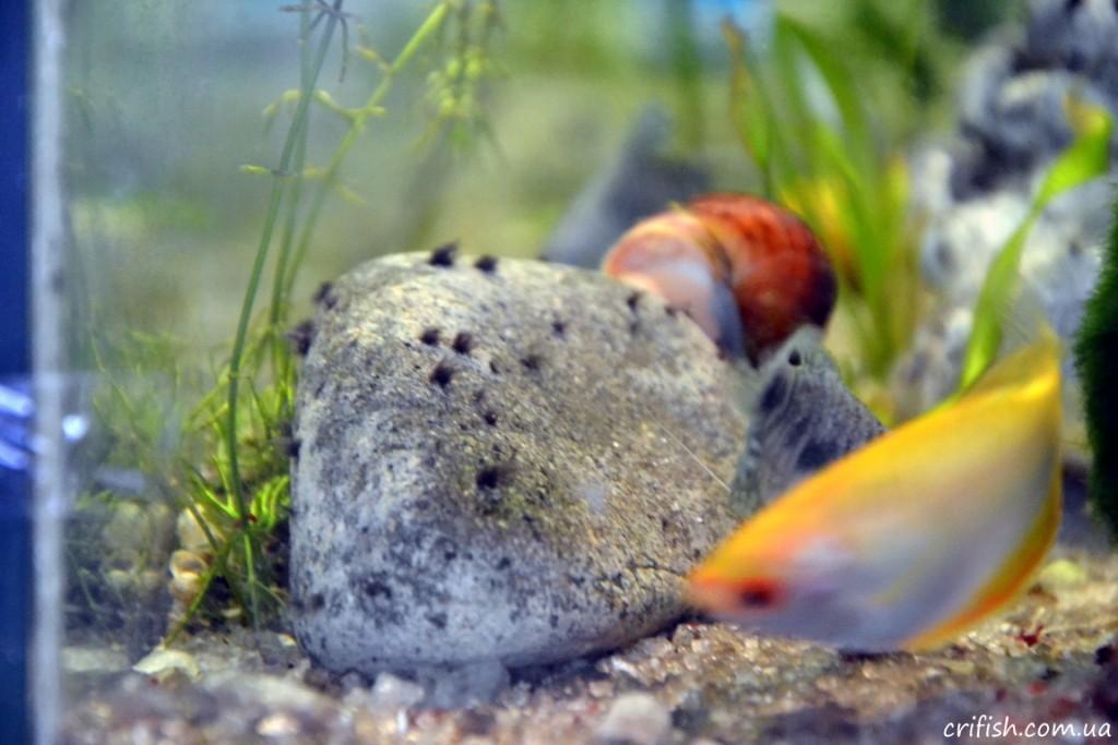 непонятности в аквариуме