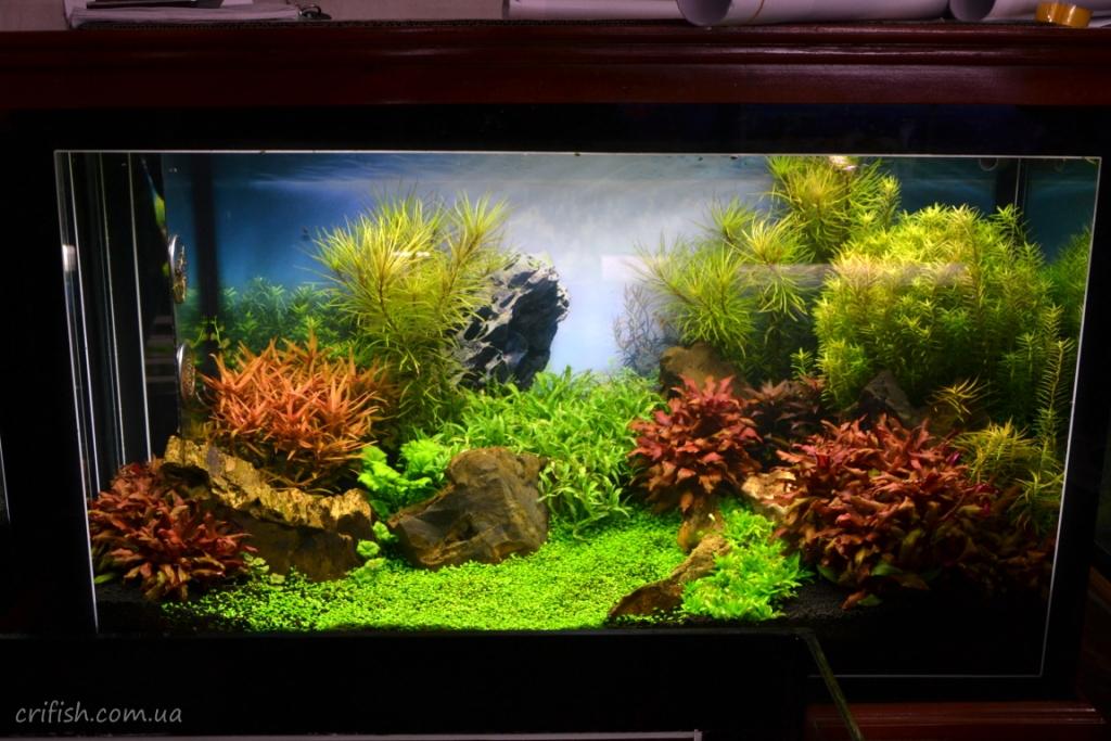 красивый аквариум в Ханое (Вьетнам) фото