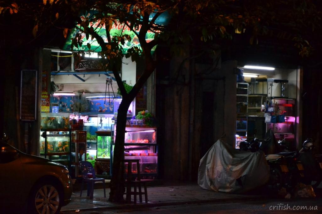 аквариумные магазины в Ханое (Вьетнам)