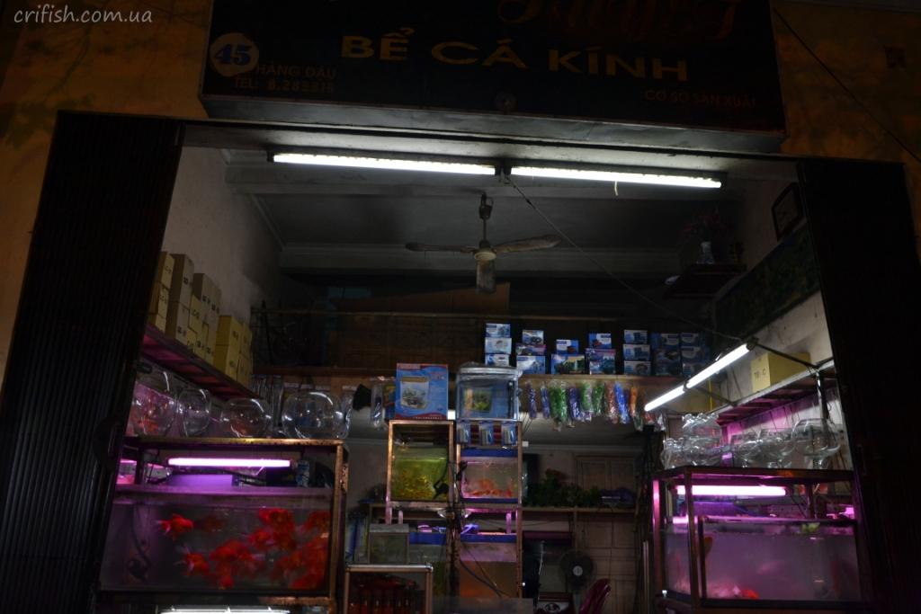 аквариумные магазины в Ханое (Вьетнам) фото