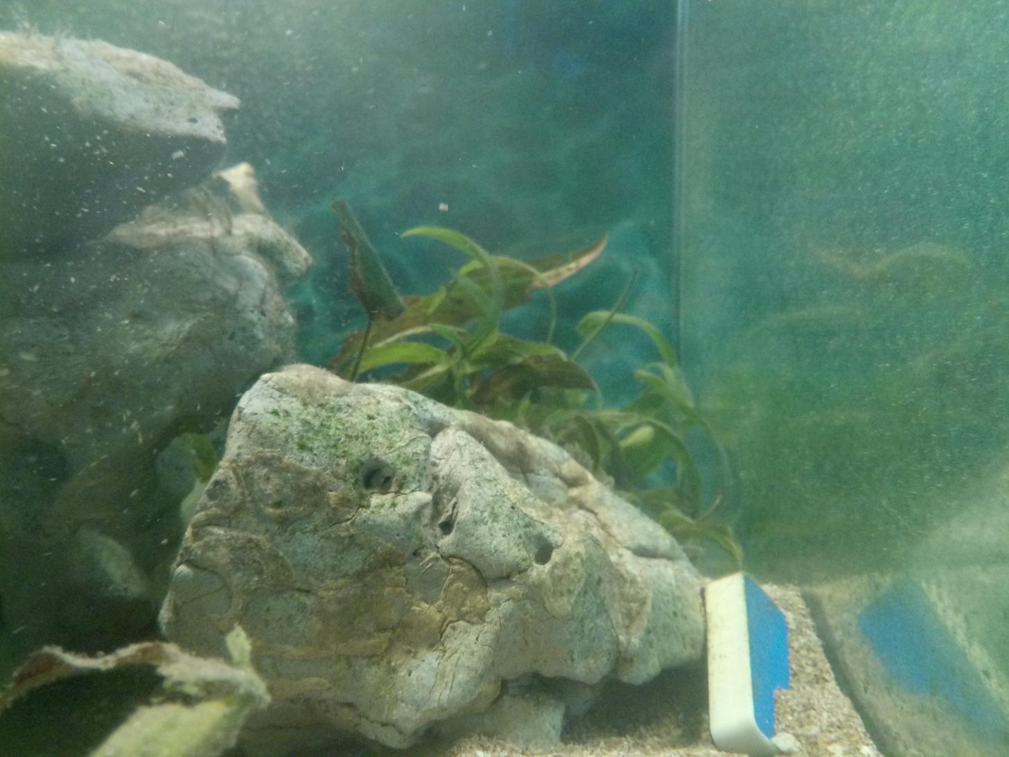 Мифы о разведении аквариумных рыбок