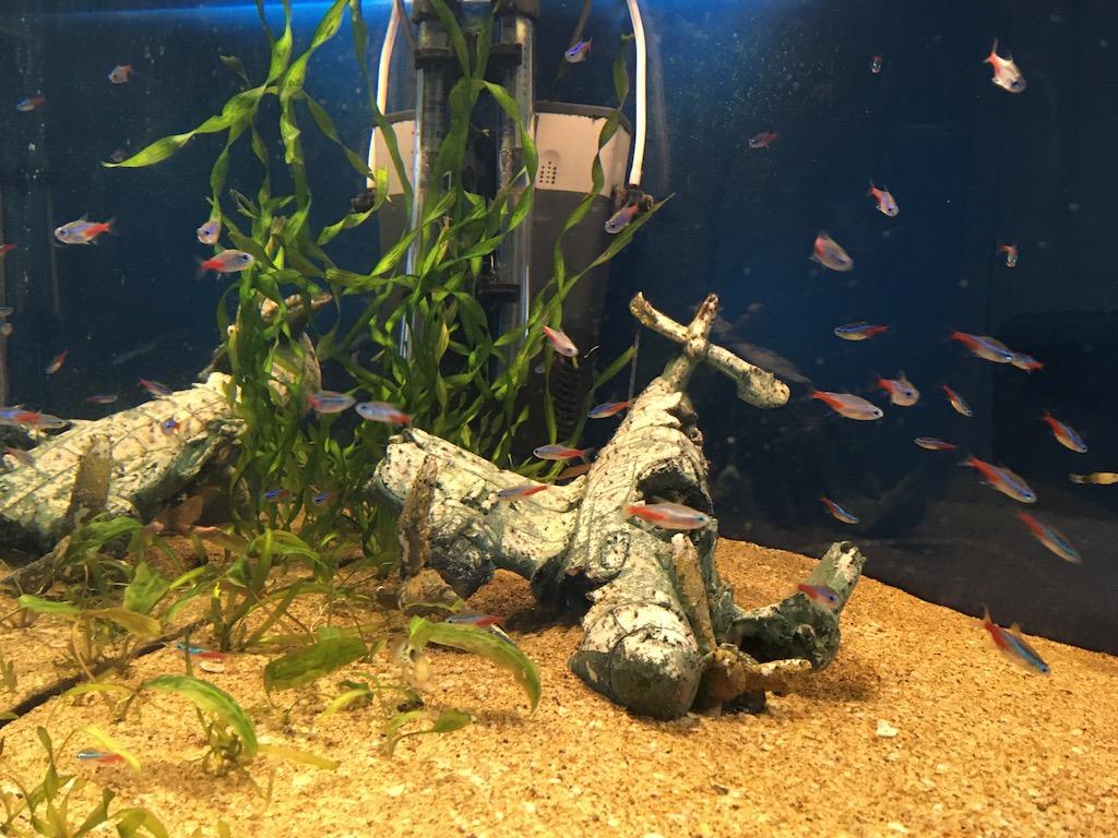 аквариум Русфета